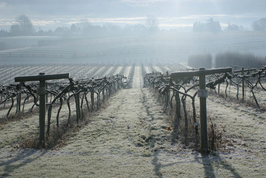A hard frost in winter