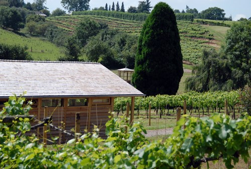 Lodge room nestled amongst the vines.