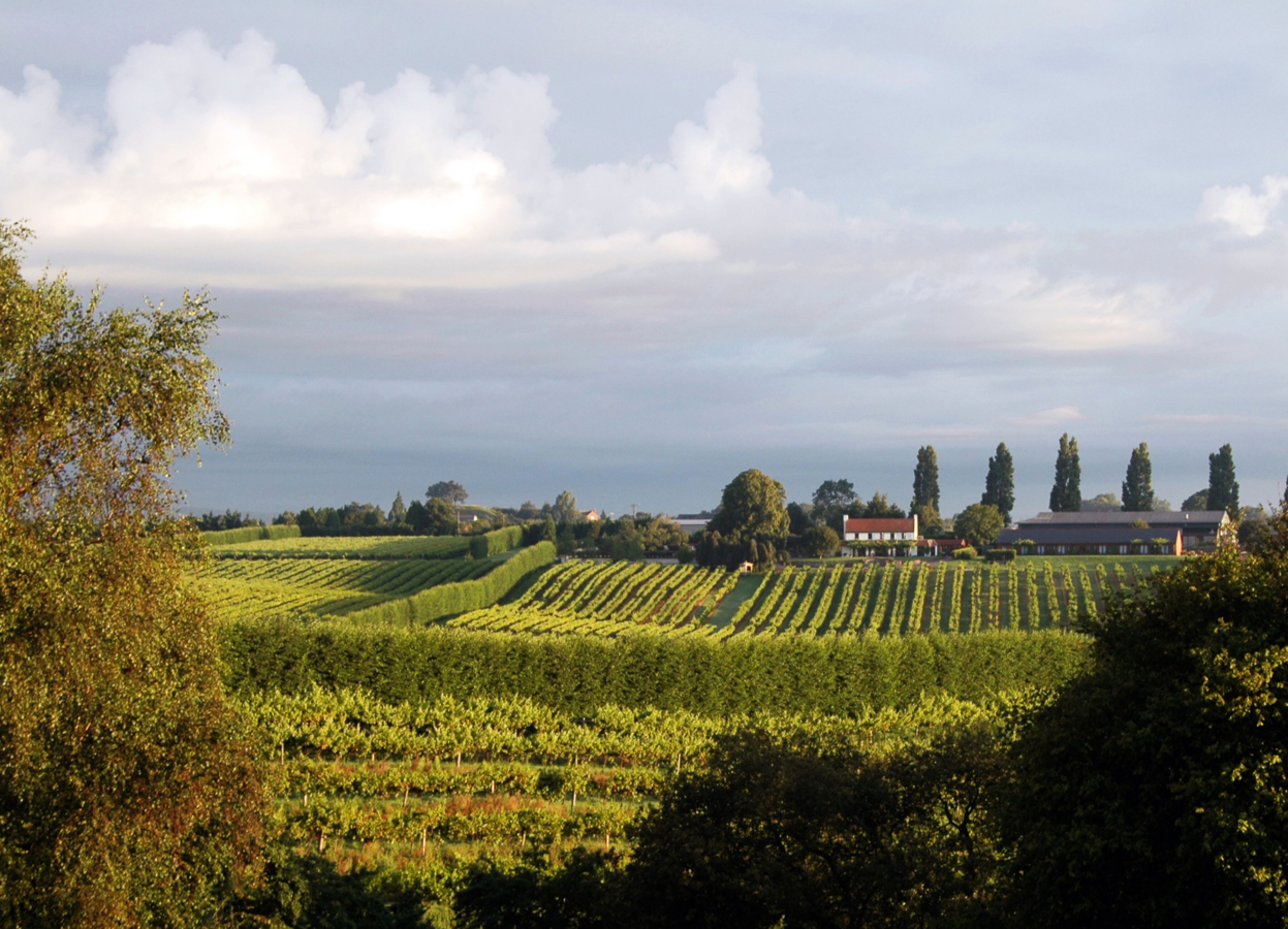 View-over-the-vines-towards-the-Brasserie-and-bedrooms-1247x900
