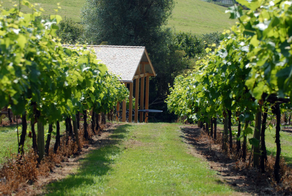 vineyard-lodge-between-vines-1024x687