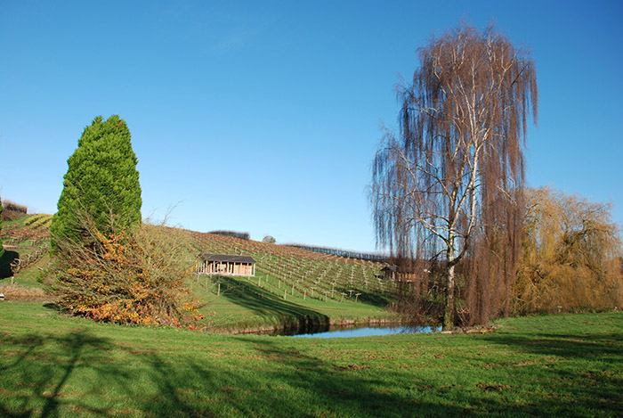 Luxury Lodges at Three Choirs Vineyards set in the vines