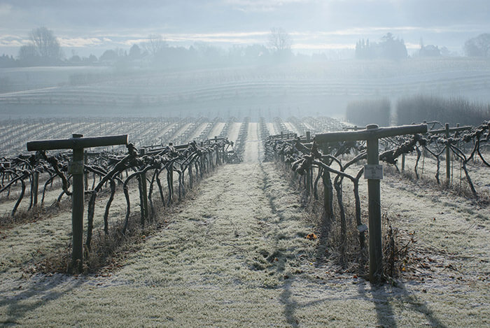 Three Choirs Vineyards in the frost in the Winter