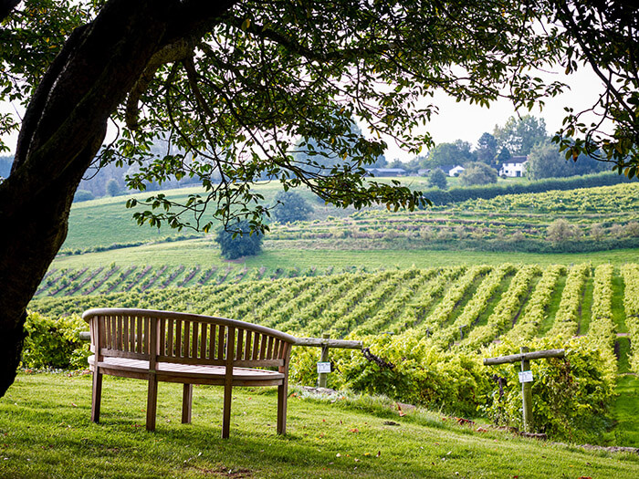 View over the vines in Spring from the Brasserie at Three Choirs Vineyards
