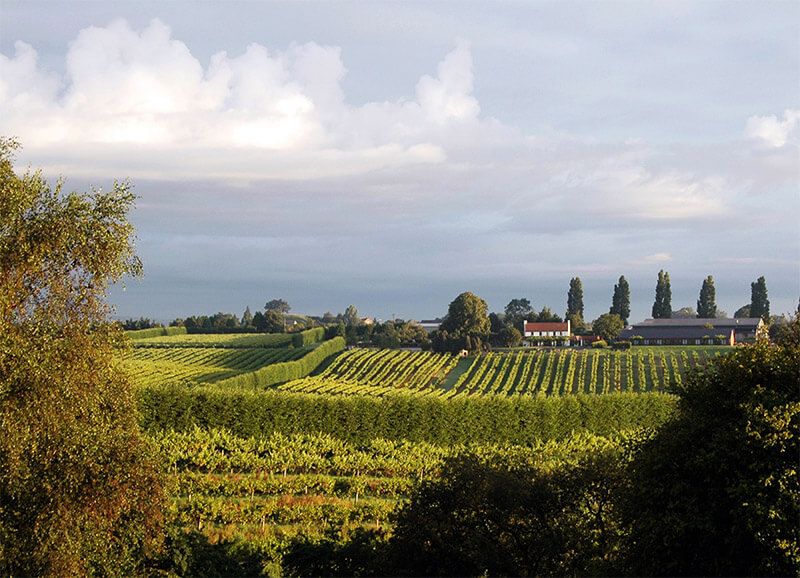 View over the vineyards towards the Brasserie and bedrooms