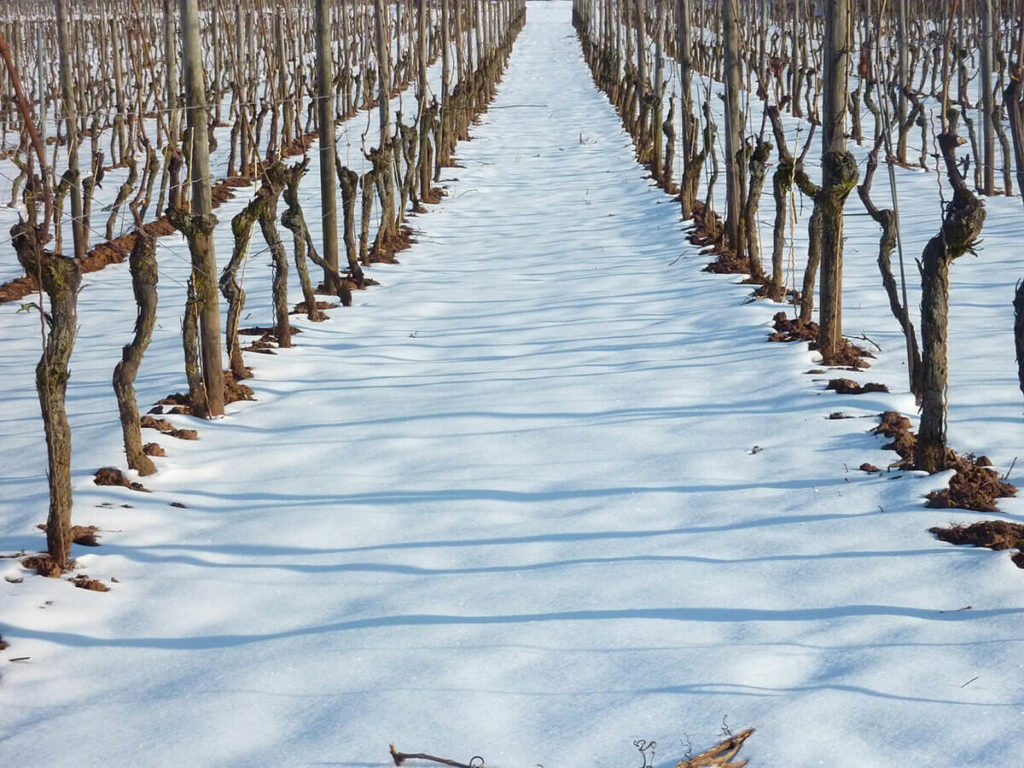 Three-Choirs-Vineyard-in-the-snow-at-winter-1-1024x768